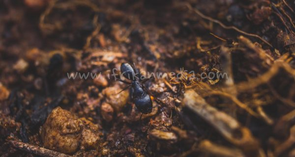 Macro Photography – My Experience And Lessons